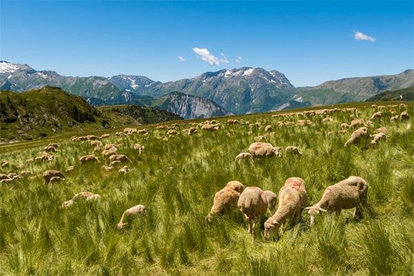 Französischen Alpen - wandern